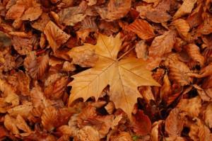 Este otoño se han caído más de lo esperado...