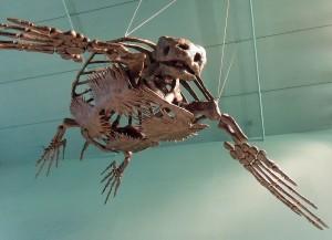 Esqueleto de una de las últimas hipotecas vistas en una sucursal bancaria