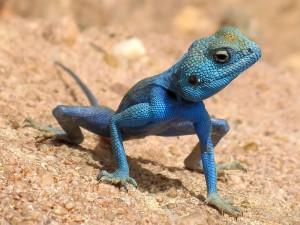 """Las nuevas hipotecas este año dan ganas de decir """"uuuhhh... lagarto-lagarto"""""""