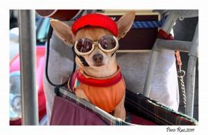 ¡Qué alegría, qué alboroto! ¡Cómo tengo el perrito piloto!