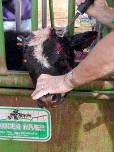 Por fin alguien coge el toro por los cuernos para que no nos pille el toro