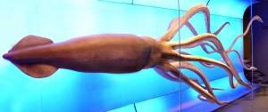 El swap es como el calamar gigante: desconocido, inquietante y asqueroso al mismo tiempo