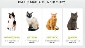 gatos a cambio de hipotecas