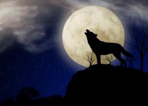 Que viene el lobo, auuuuuuu