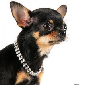 Cuando el collar vale más que el perro